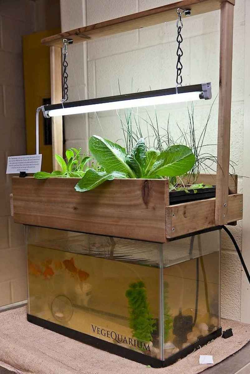 40 Easy To Try Hydroponic Gardening For Beginners Design Ideas And Remodel (29)