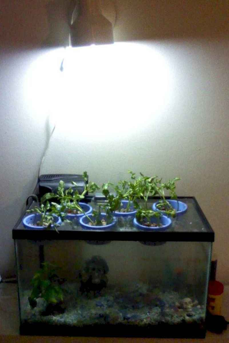 40 Easy To Try Hydroponic Gardening For Beginners Design Ideas And Remodel (36)