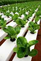 40 Easy To Try Hydroponic Gardening For Beginners Design Ideas And Remodel (5)