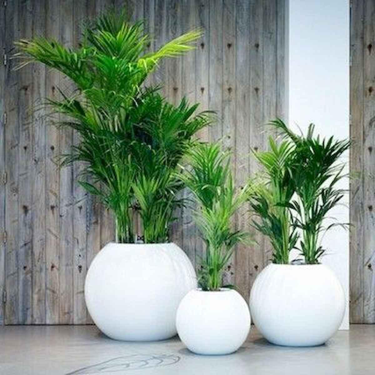 50 Best Indoor Garden For Apartment Design Ideas And Remodel (20)