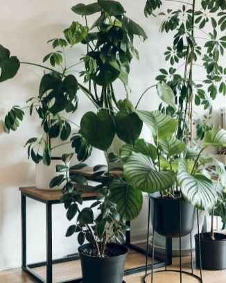 50 Best Indoor Garden For Apartment Design Ideas And Remodel (33)