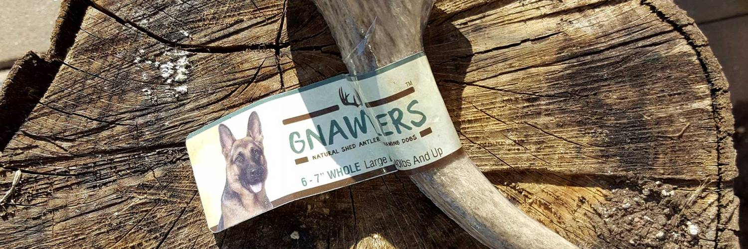 gnawtlers review