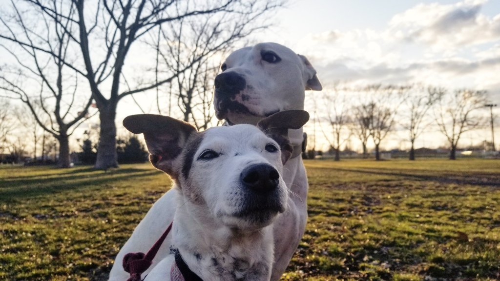 cbd for dogs review
