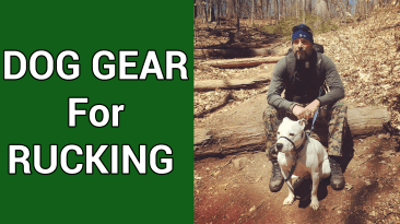 Must Have Gear When Rucking With Your Dog