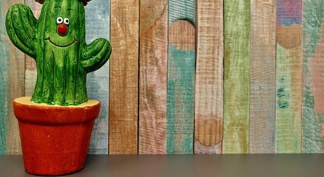 Auch ein Kaktus braucht Wasser