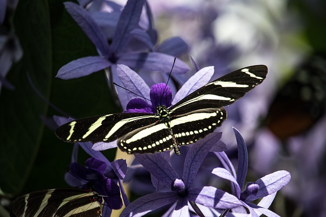 Schmetterling als Symbol für Selbstmitgefühl undSelbstempathie