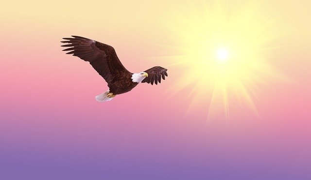 Coronakrise: Adler fliegt vor der Sonne