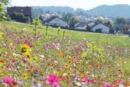 Blumenwiese-bei-Aidlingen