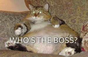 Who's the boss? Are you an owner?