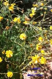 Butterfly in Mom's Garden (2)