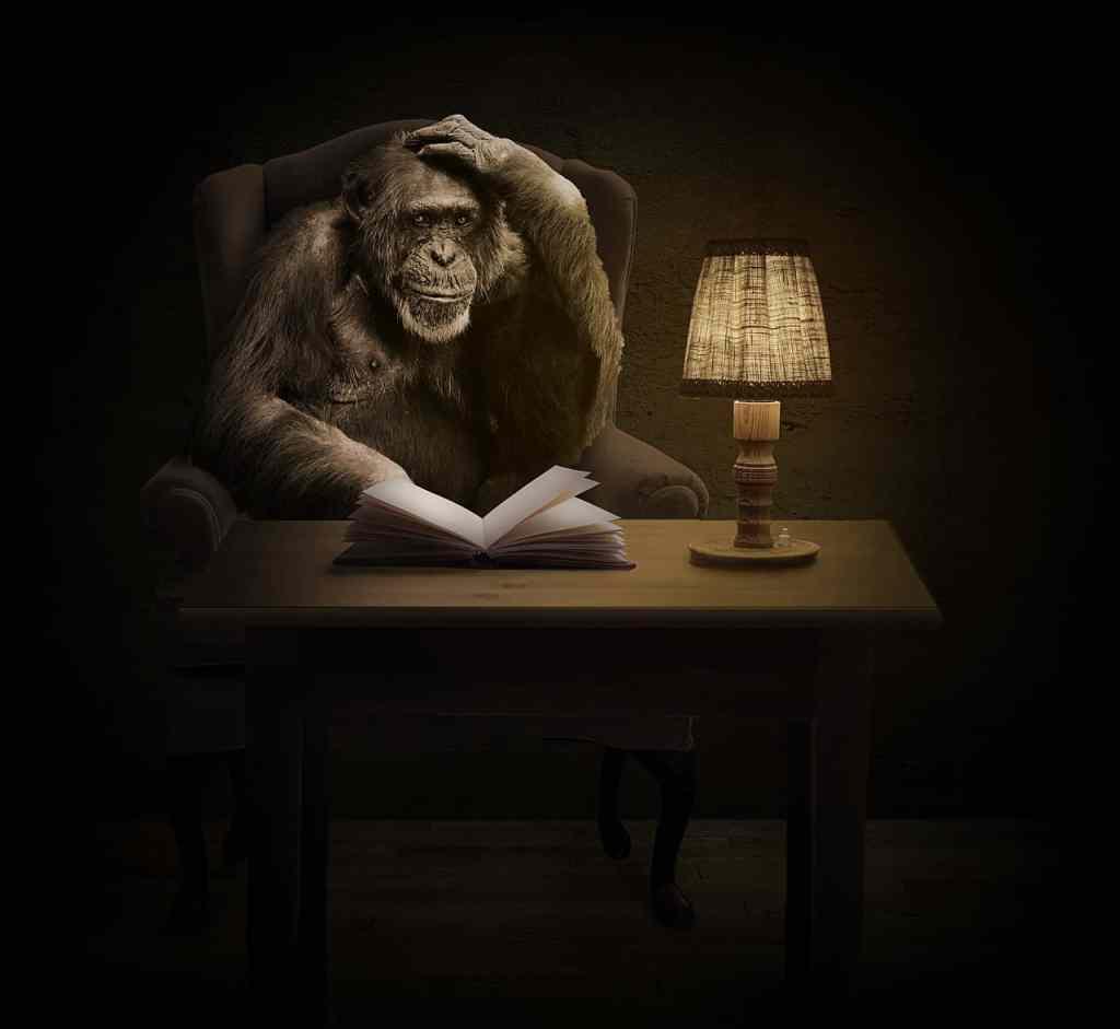 monkey 1757972 1280 - Wie arbeite ich?