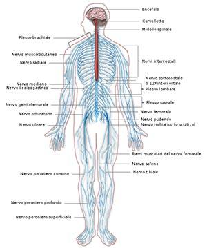 rilassamento psico-fisico e sistema nervoso