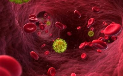 hiv_virus_in_the_bloodstream_alamy-large_trans-pjliwavx4cowfcaekesb3kvxit-lggwcwqwla_rxju8