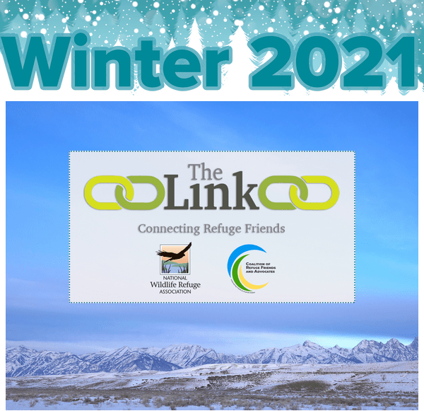 The Link — Winter 2021 Newsletter