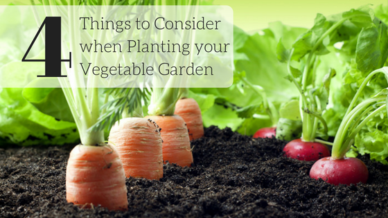 4 Things to Consider Before Starting your Vegetable Garden