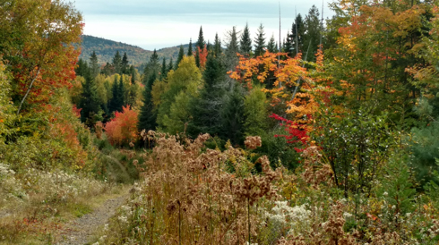 North Maine Big Woods