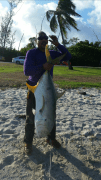 Guimel Perez caught this jack crevalle off of Southern Blvd next to the Winter Whitehouse with live mullet as bait
