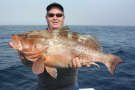 Mike Conway from Bradenton FL w/a huge red grouper caught in about ~ 125 ft, offshore off Anna Maria Island using a live pinfish.
