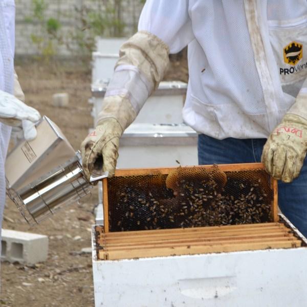 close up look at bees