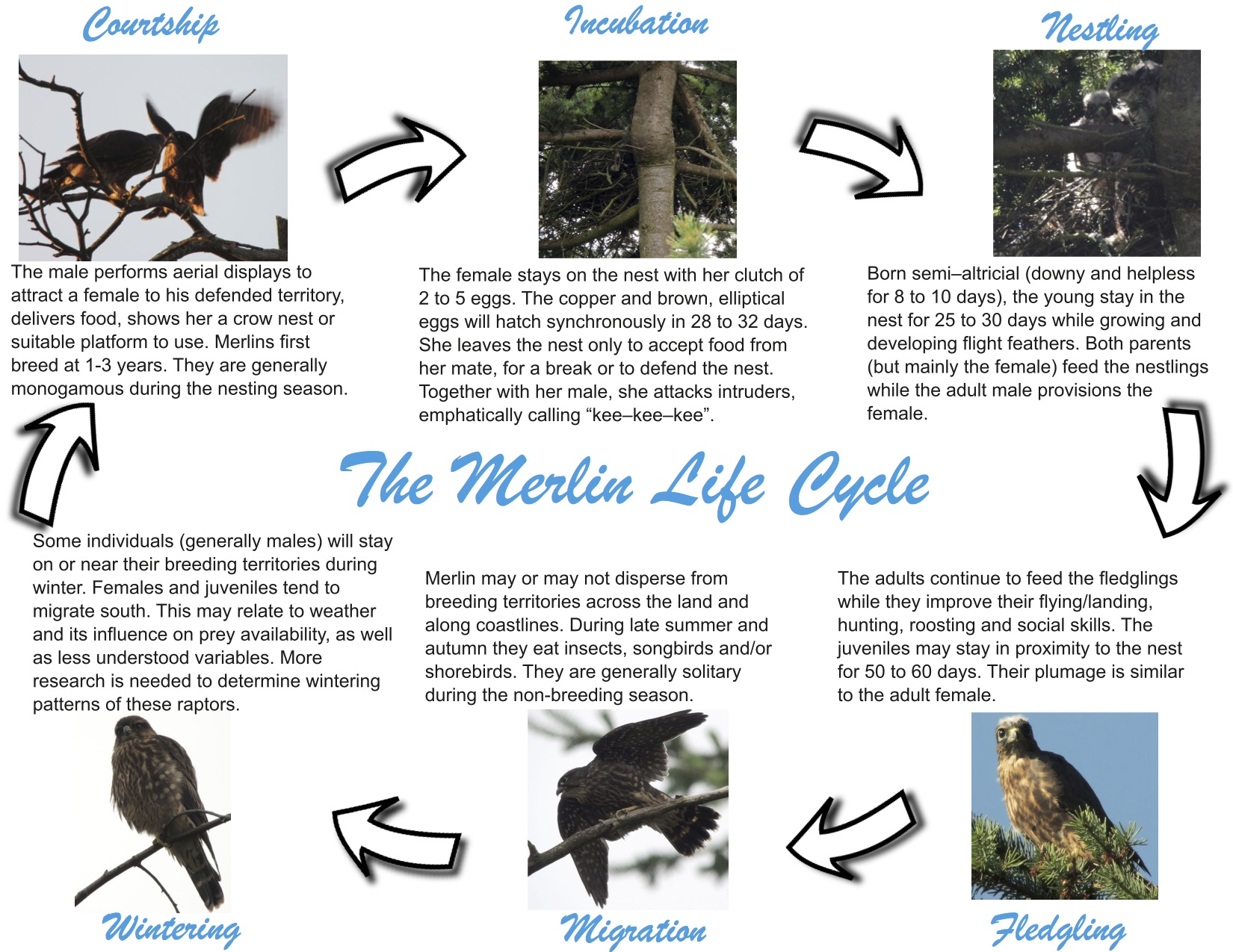 Life Cycle Coastal Forest Merlin Project