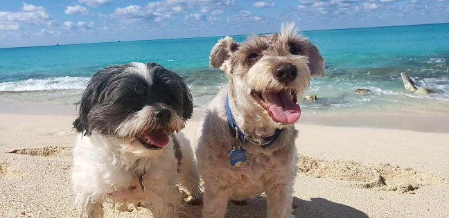 Jazzy Beach Dogs