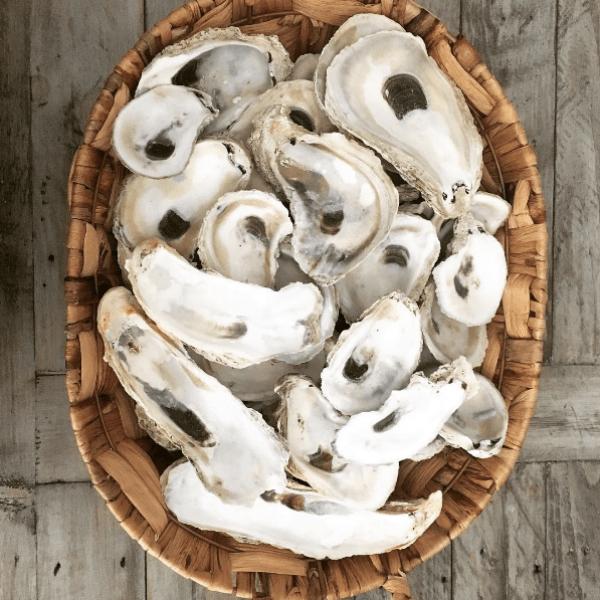 coastal-kelder_oyster-shells
