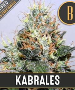 Kabrales Cheese