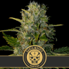 Santa Meurte feminized cannabis seeds