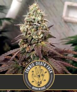 Zombie Death Fuck Feminized Seeds