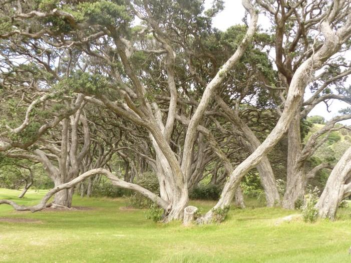 More fabulous trees