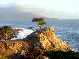 A cypress on the Monterey coastline
