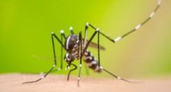dengue 17