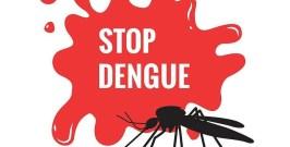 dengue 30