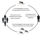 dengue 5