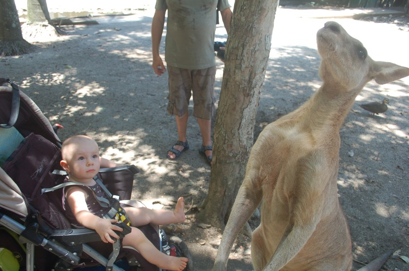 A photo of a baby looking up in wonder at a huge kangaroo at Wildlife Habitat Zoo