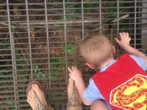 A toddler looking down at the Daintree rainforest from a walkway.