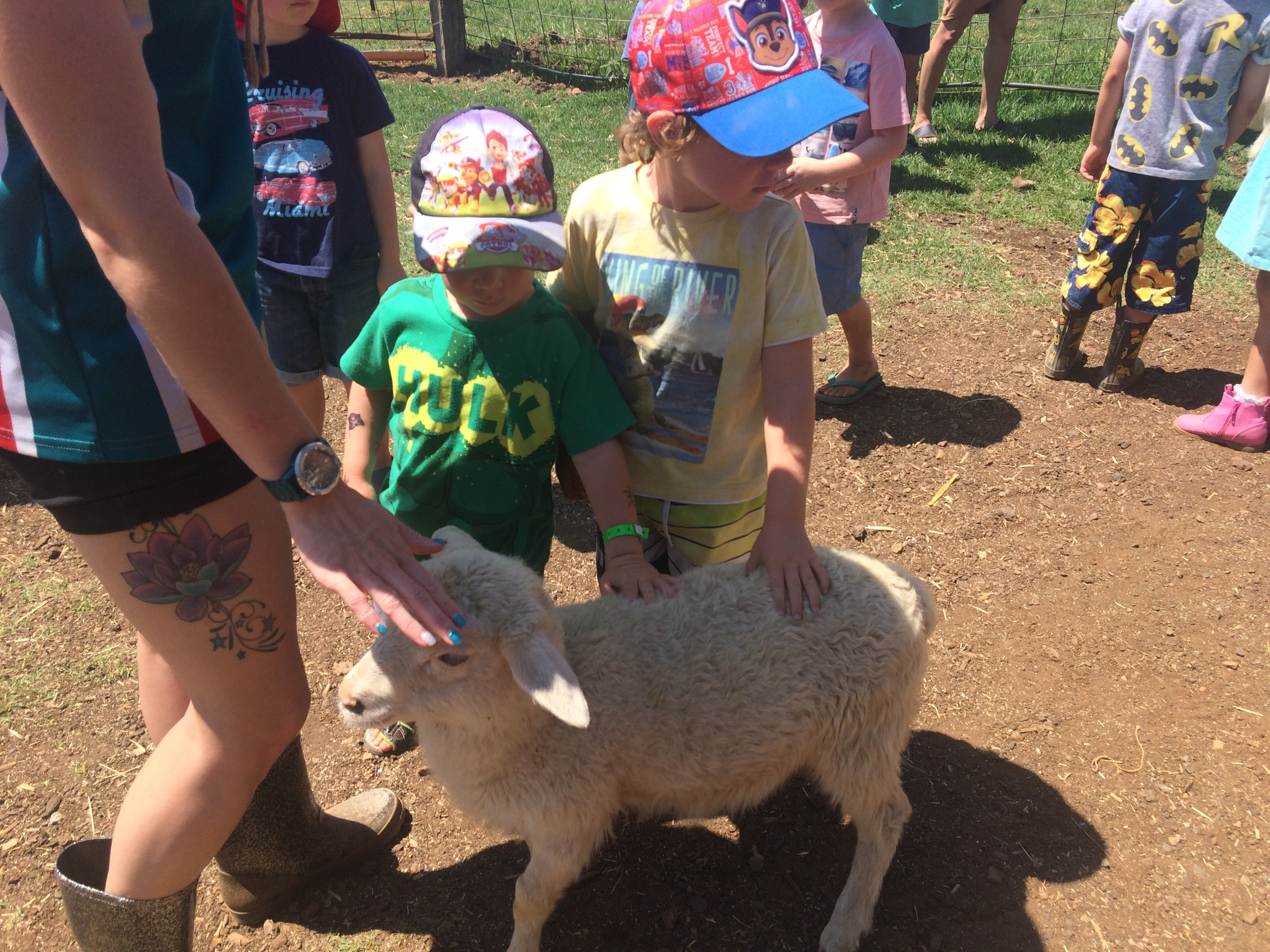 Meeting a baby lamb at Maleny Dairies