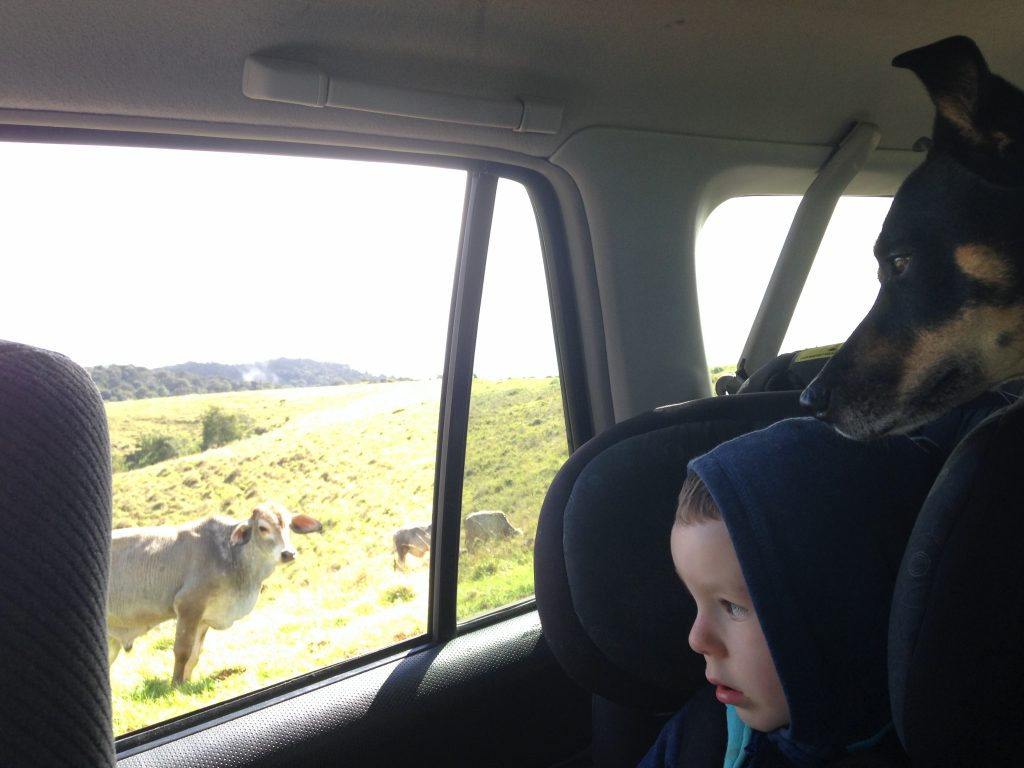 Looking at a cow out of the window