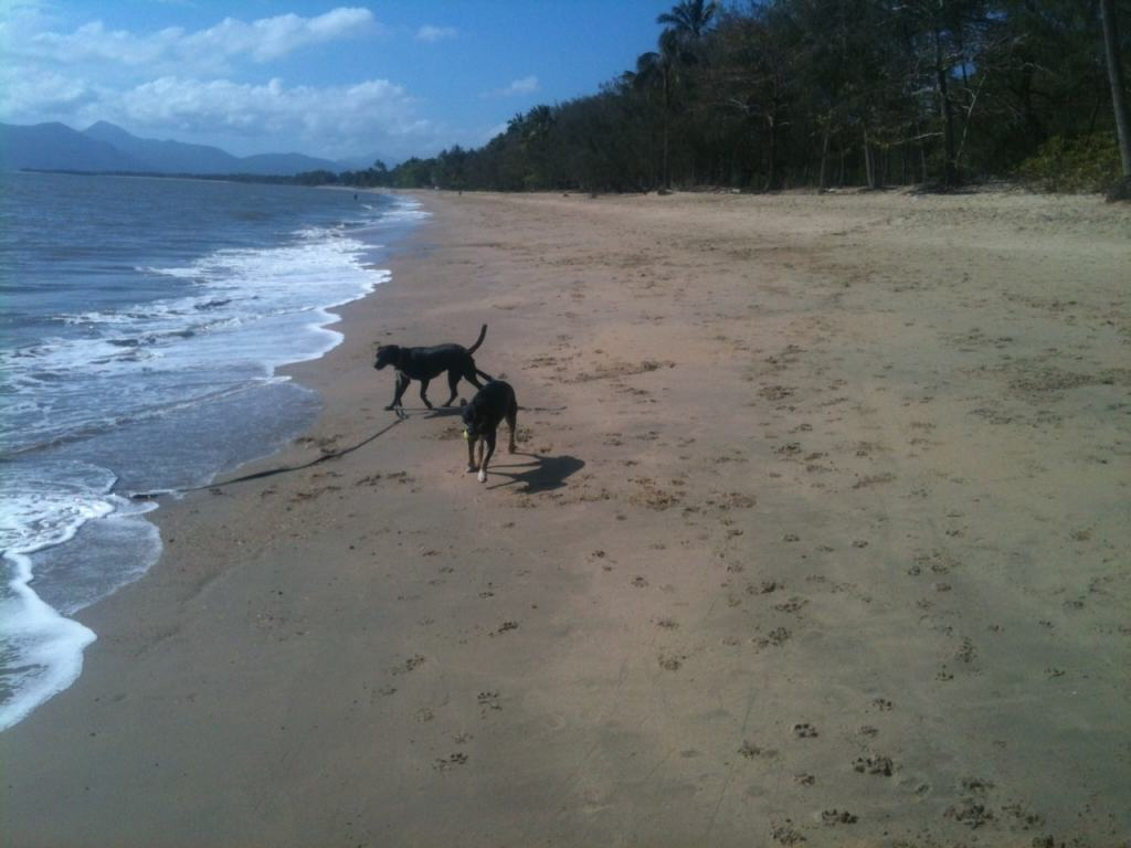 Dogs running along the beach in Cairns at Holloways Beach
