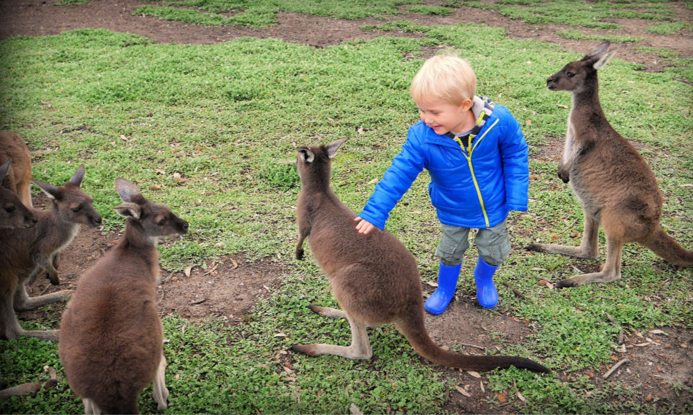 Uralla Wildlife Sanctuary a child with a wallaby south-west Australia