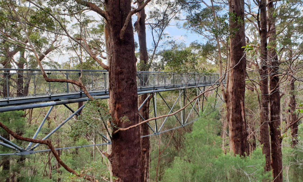 Valley of the Giants Tree Top Walk south-west Australia