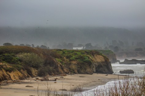 Beach at Año Nuevo [photo: Dawn Page]
