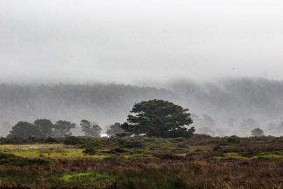 Año Nuevo State Park [photo: Dawn Page]