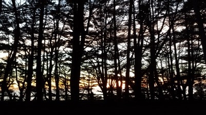 Sunset through the trees at Fitzgerald Marine reserve in Moss Beach. Dan Page/CoastsideSlacking