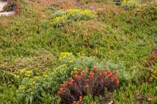 Wildflowers at Garrapata State Beach. Dawn Page/CoastsideSlacking