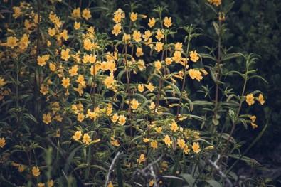 Moody wildflowers at Garrapata State Beach. Dawn Page/CoastsideSlacking