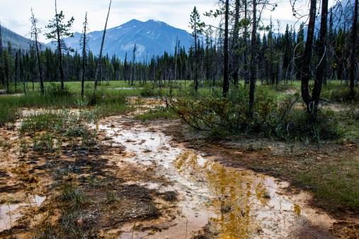 Unhappy pine trees at the Paint Pots of Kootenay National Park, BC, Canada. Dawn Page / CoastsideSlacking