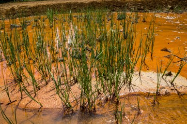 Marsh grass enjoying the spa treatment at Paint Pots of Kootenay National Park, BC, Canada. Dawn Page / CoastsideSlacking
