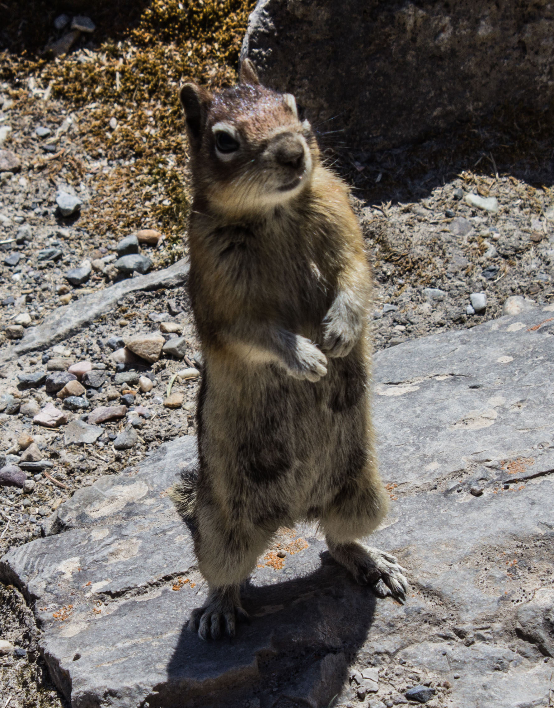 Curious (or hungry) squirrel at Banff National Park. Dawn Page / CoastsideSlacking