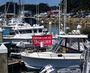 Salmon for sale at Pillar Point Harbor. Dawn Page / CoastsideSlacking